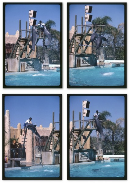 Collage of 4 photos (each very similar) of 2 dolphins jumping through hoops